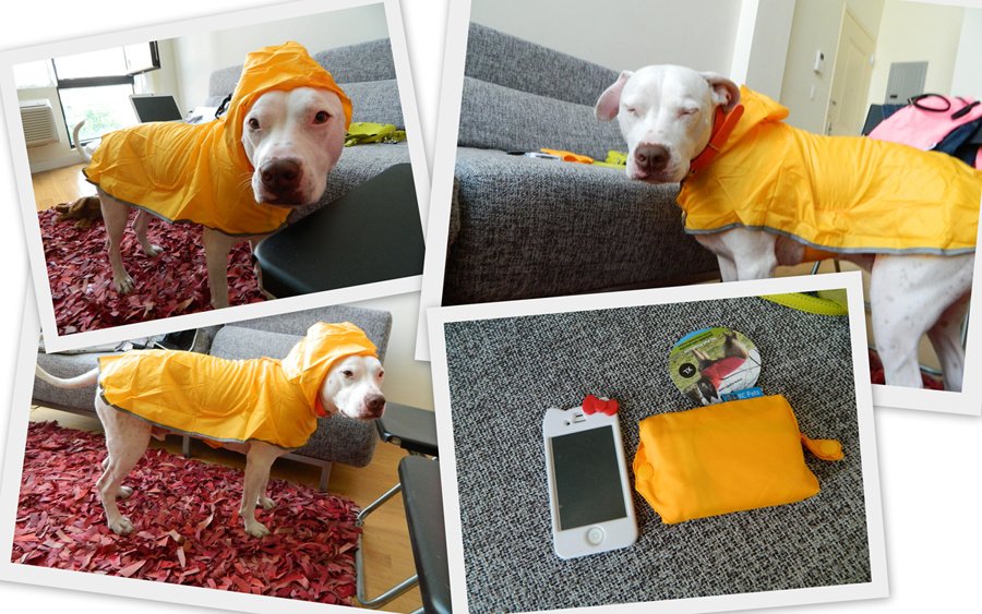 One Slick Pup Rcpetproducts Heydoyou Lifestyle Blog